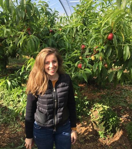Arranca la cosecha de las primeras nectarinas