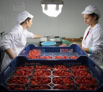 Frutas Remolino
