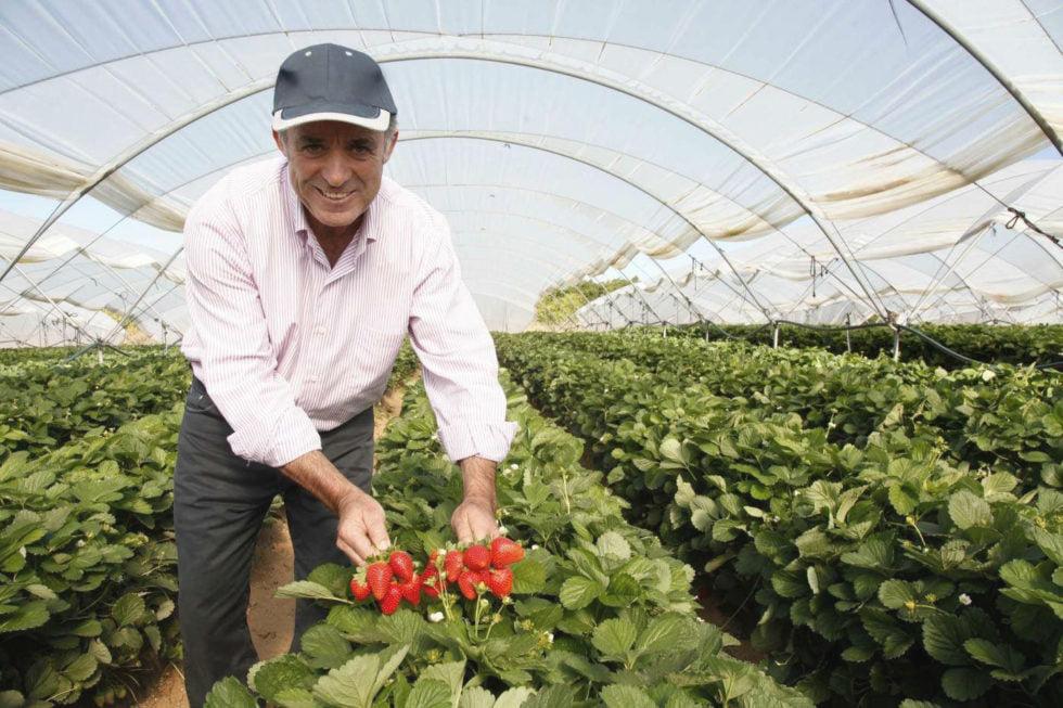 Alcampo comparte la experiencia de nuestro productor de fresas Agromartin
